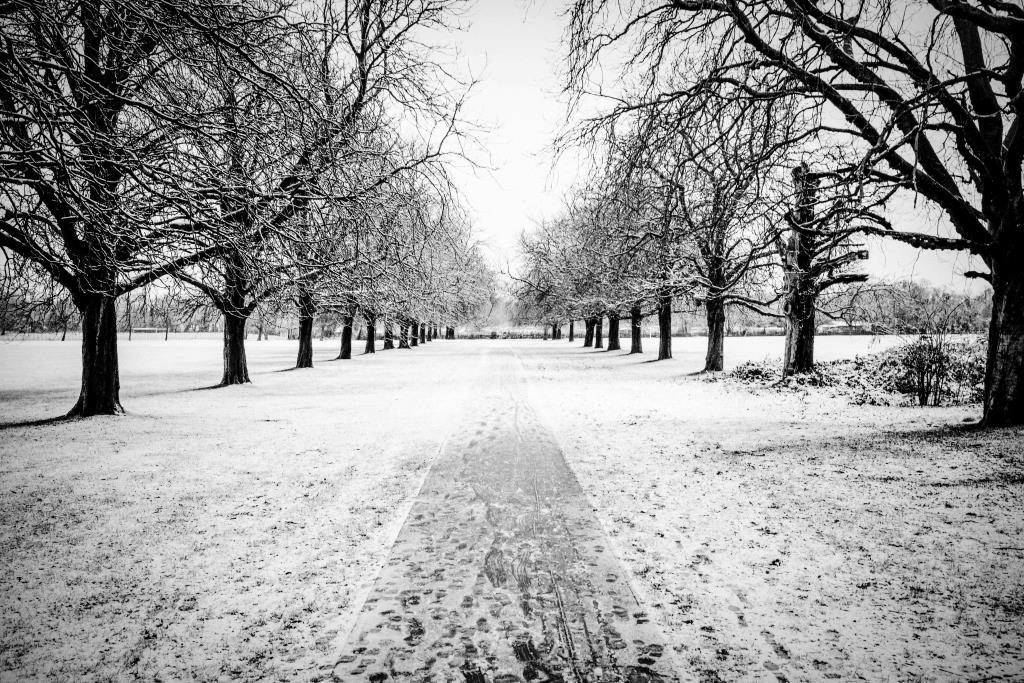 Picture 8 Scotch Common avenue of trees in snow by Imran Malik