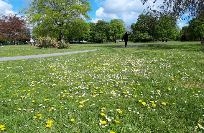 Park space with green grass and flowers