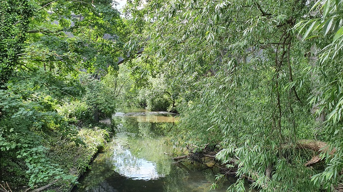 trees lining the banks of the River Brent hanwell